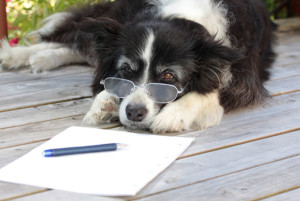 dogwriting